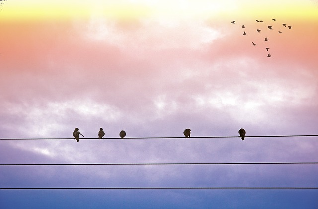 Idaho Power advances grid modernization efforts with fault detection sensors